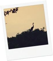 oiseau Rwanda